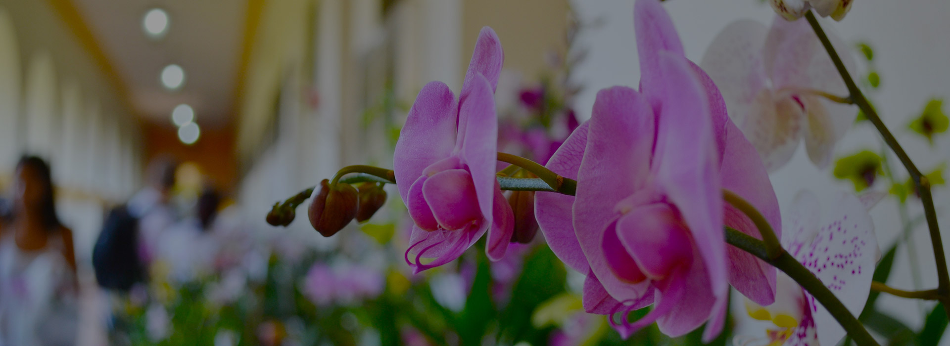 Curso de Orquídeas 2019