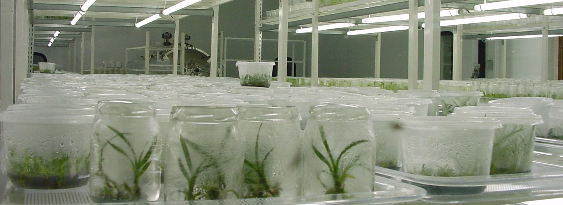 Câmara de Crescimento